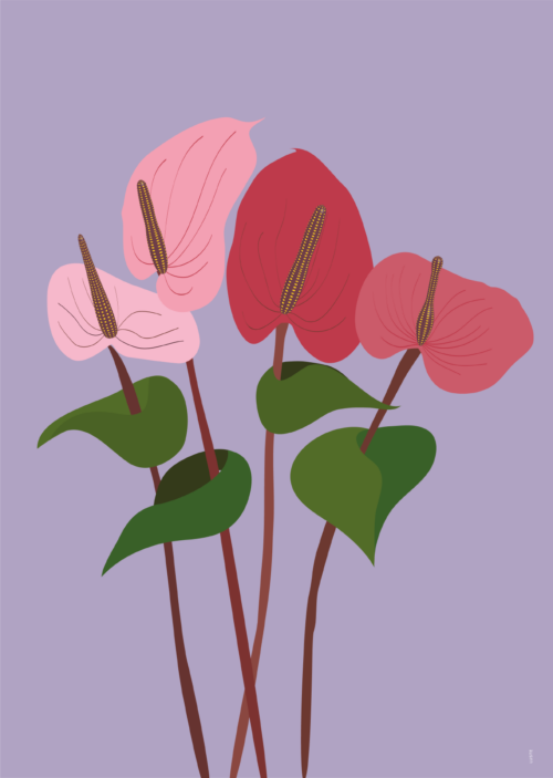 Plakat Flamingolill