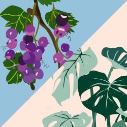 Kombinatsioon erinevatest taimedest/marjadest